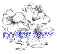 artwork_madson_sympathy_card_extra_flower_300dpi_thumbnail